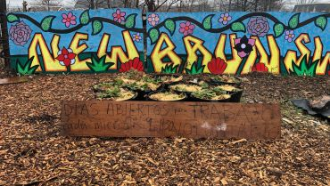 Ask Us Your Questions About Urban Agriculture!
