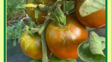 Harvest Update – Week of July 27, 2020