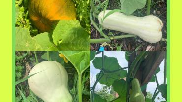 Harvest Update – Week of August 3, 2020